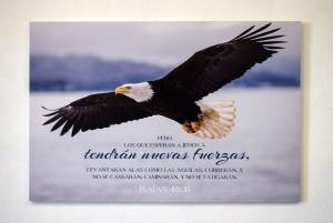 Cuadro canvás Águila (Isaías 40:31)